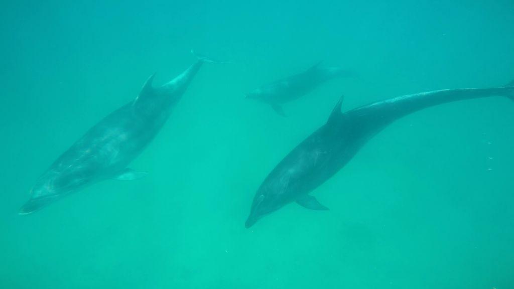 fotka-delfinu-01